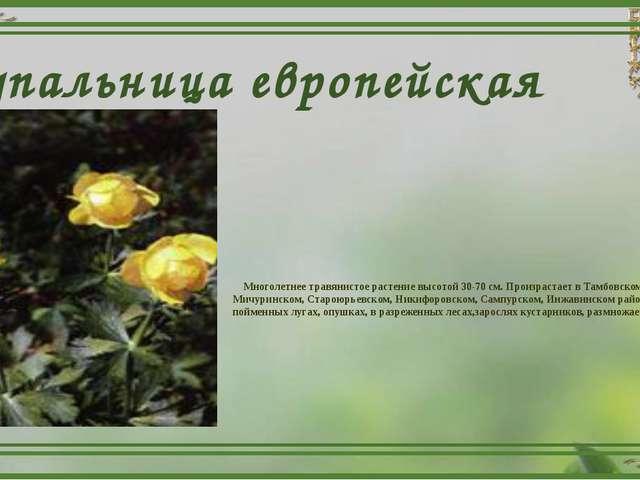 Купальница европейская Многолетнее травянистое растение высотой 30-70 см. Про...