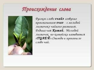 Русское слово «чай» созвучно произношению «ча» - « молодой листочек» чайного