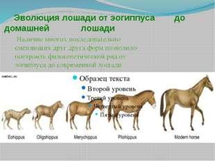 Эволюция лошади от эогиппуса до домашней лошади Наличие многих последователь