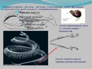 Рудиментарные органы- органы, утратившие свою функцию в результате длительног