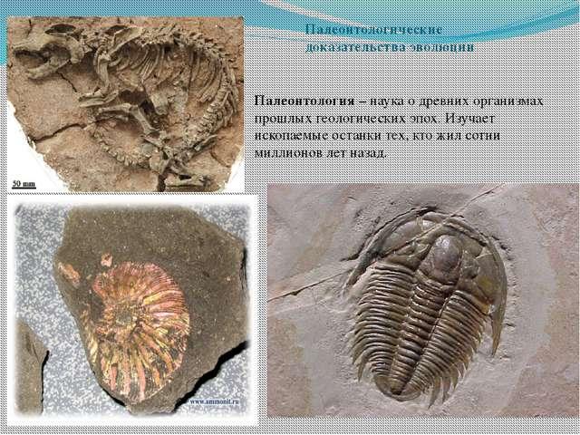 Палеонтологические доказательства эволюции Палеонтология – наука о древних ор...