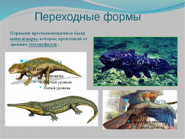 Переходные формы Первыми пресмыкающимися были котилозавры, которые произошли...