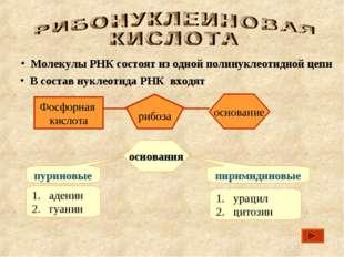 В состав нуклеотида РНК входят основания пуриновые пиримидиновые Молекулы РН