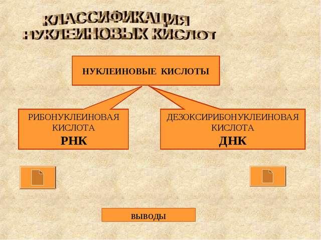 НУКЛЕИНОВЫЕ КИСЛОТЫ РИБОНУКЛЕИНОВАЯ КИСЛОТА РНК ДЕЗОКСИРИБОНУКЛЕИНОВАЯ КИСЛОТ...