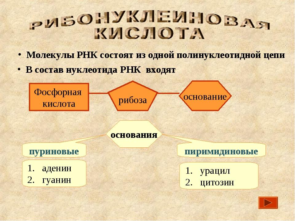 В состав нуклеотида РНК входят основания пуриновые пиримидиновые Молекулы РН...