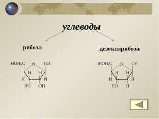 углеводы рибоза дезоксирибоза О ОН Н ОН Н Н НО Н НОН2С О ОН Н Н Н Н НО Н НОН2С