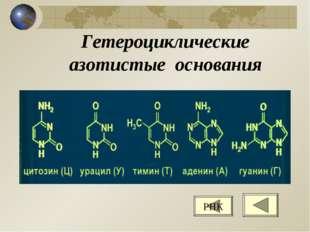 Гетероциклические азотистые основания РНК