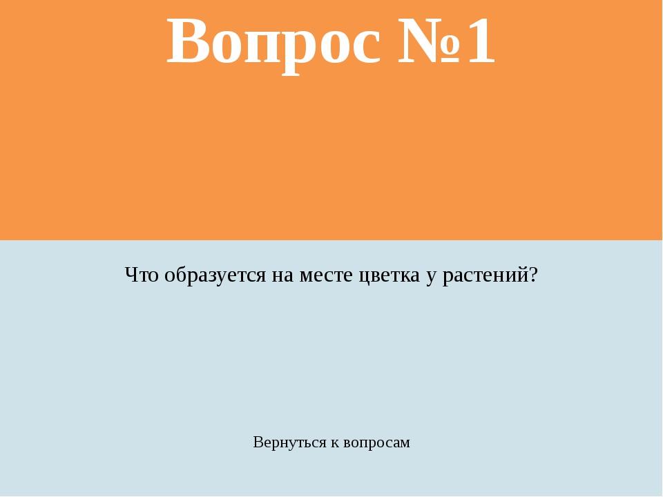 Вопрос №3 Как «зовут» самое большоедерево в мире? Вернуться к вопросам Прави...