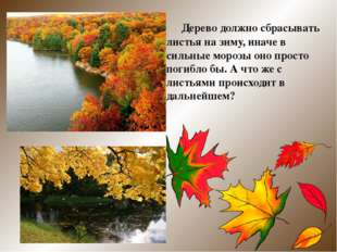 Дерево должно сбрасывать листья на зиму, иначе в сильные морозы оно просто п