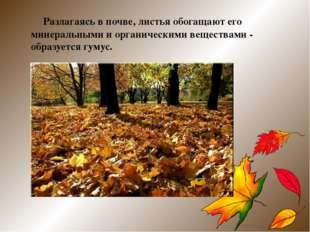 Разлагаясь в почве, листья обогащают его минеральными и органическими вещест