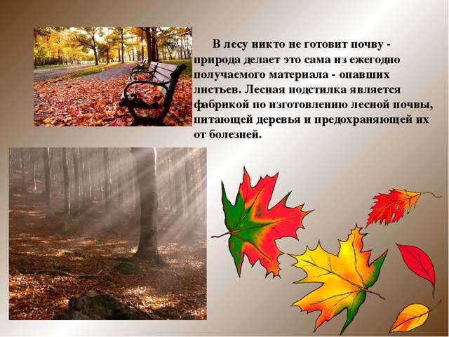 В лесу никто не готовит почву - природа делает это сама из ежегодно получаем...