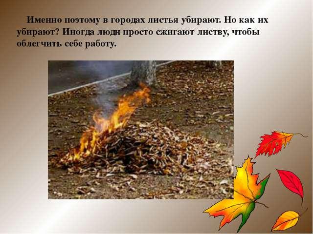 Именно поэтому в городах листья убирают. Но как их убирают? Иногда люди прос...