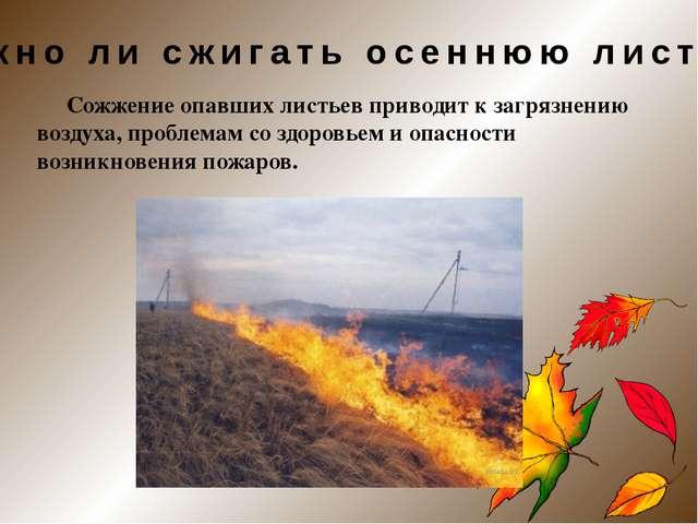 Сожжение опавших листьев приводит к загрязнению воздуха, проблемам со здоров...