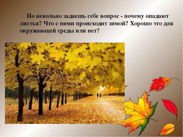 Но невольно задаешь себе вопрос - почему опадают листья? Что с ними происход...