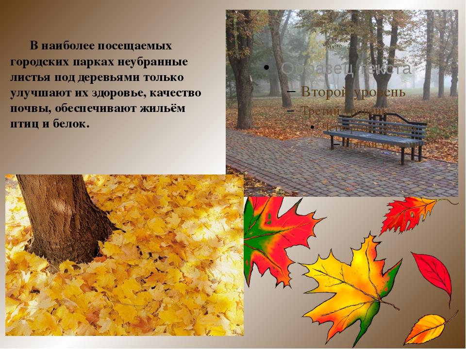 В наиболее посещаемых городских парках неубранные листья под деревьями тольк...