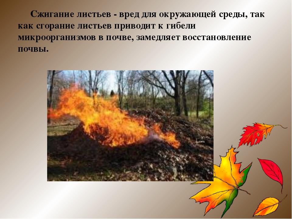 Сжигание листьев - вред для окружающей среды, так как сгорание листьев приво...