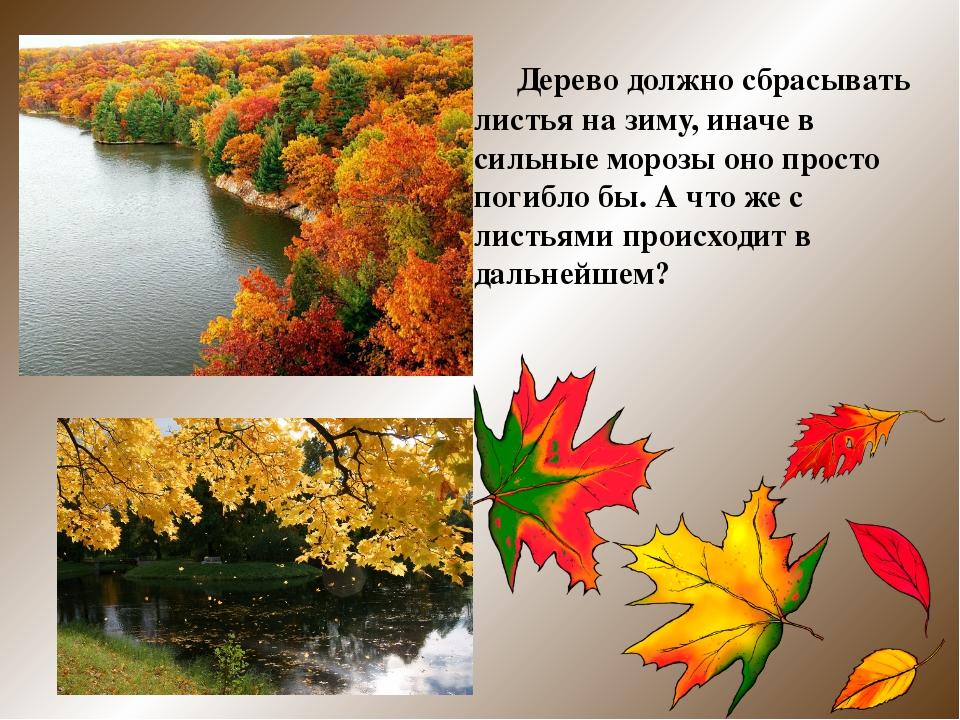 Дерево должно сбрасывать листья на зиму, иначе в сильные морозы оно просто п...