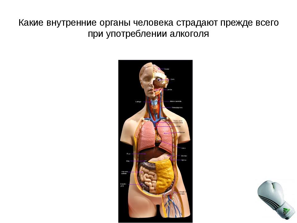 Какие внутренние органы человека страдают прежде всего при употреблении алког...