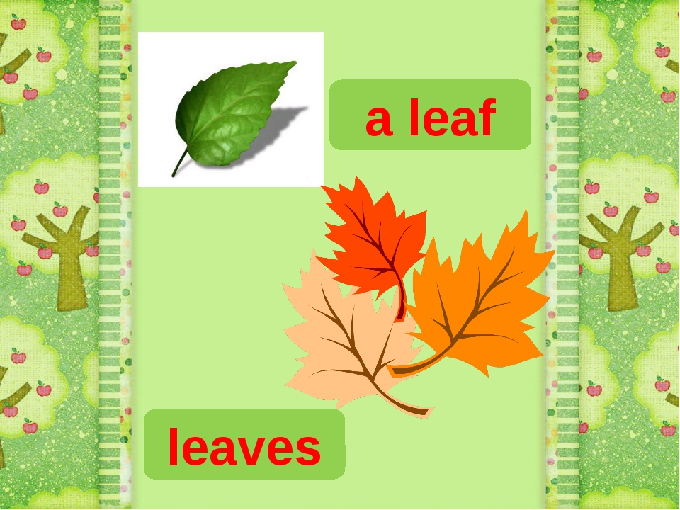 a leaf leaves