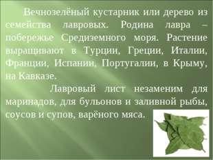 Вечнозелёный кустарник или дерево из семейства лавровых. Родина лавра – побе