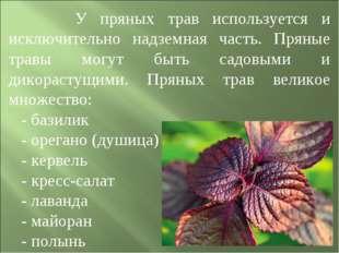 У пряных трав используется и исключительно надземная часть. Пряные травы мог