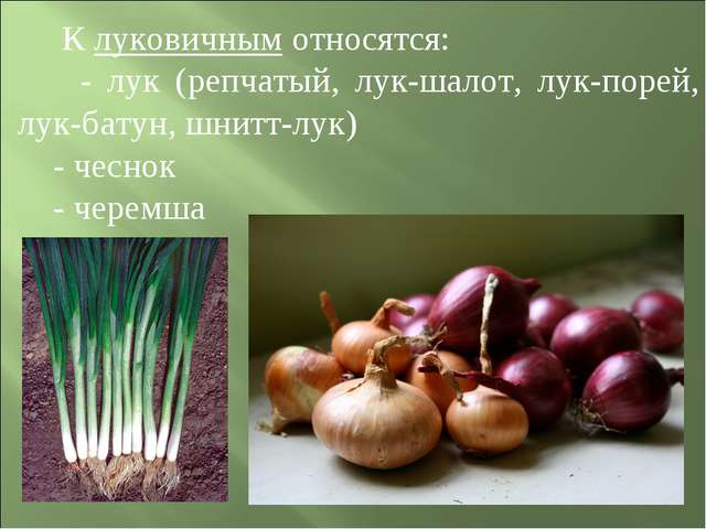 К луковичным относятся: - лук (репчатый, лук-шалот, лук-порей, лук-батун, шн...