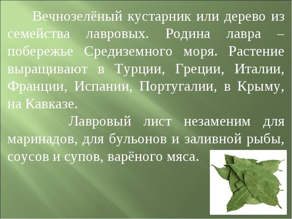 Вечнозелёный кустарник или дерево из семейства лавровых. Родина лавра – побе...