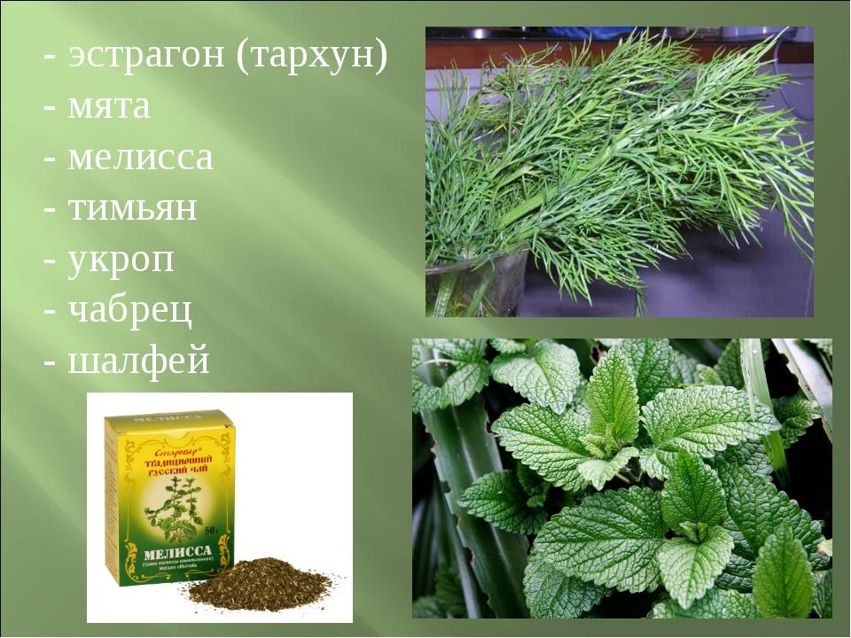 - эстрагон (тархун) - мята - мелисса - тимьян - укроп - чабрец - шалфей