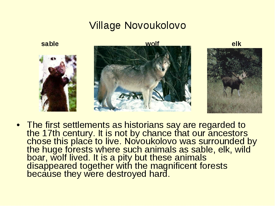 Village Novoukolovo sable wolf elk The first settlements as historians say a...