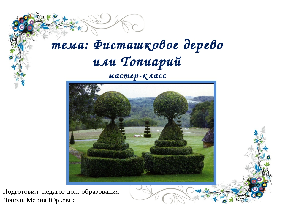 тема: Фисташковое дерево или Топиарий мастер-класс Подготовил: педагог доп. о...