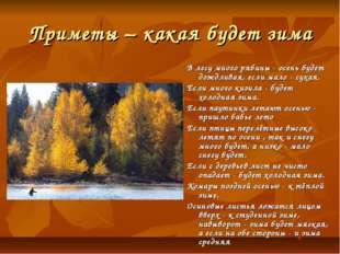 Приметы – какая будет зима В лесу много рябины - осень будет дождливая, если