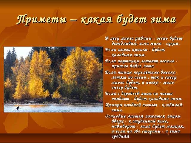 Приметы – какая будет зима В лесу много рябины - осень будет дождливая, если...