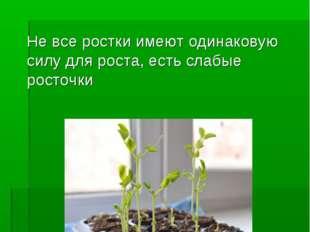 ЧЕРЕЗ ДВЕ НЕДЕЛИ Не все ростки имеют одинаковую силу для роста, есть слабые р