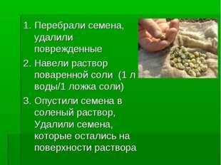 Опыт №1. Подготовка семян к посадке 1. Перебрали семена, удалили поврежденные