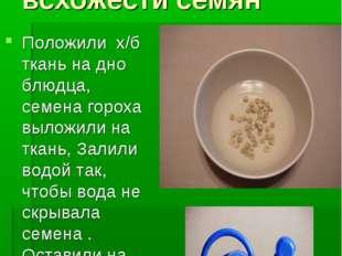 Опыт №2. Определение всхожести семян Положили х/б ткань на дно блюдца, семена