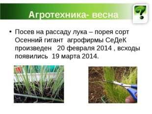 Агротехника- весна Посев на рассаду лука – порея сорт Осенний гигант агрофирм