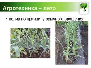 полив по принципу арычного орошения Агротехника – лето