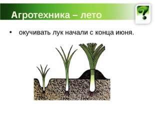 Агротехника – лето окучивать лук начали с конца июня.