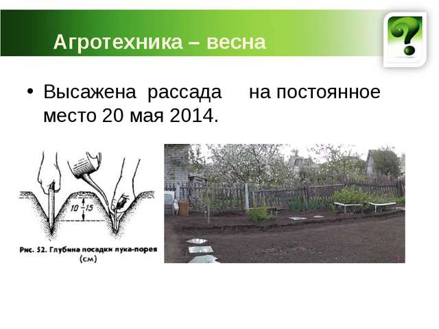 Агротехника – весна Высажена рассада на постоянное место 20 мая 2014.
