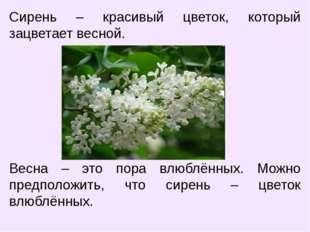 Сирень – красивый цветок, который зацветает весной. Весна – это пора влюблённ