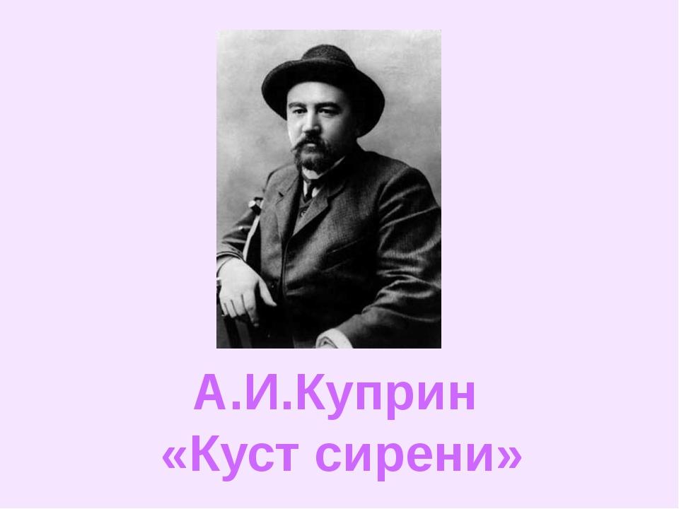 А.И.Куприн «Куст сирени»