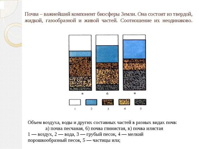 Почва – важнейший компонент биосферы Земли. Она состоит из твердой, жидкой,...