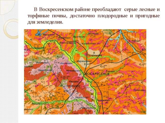 В Воскресенском районе преобладают серые лесные и торфяные почвы, достаточно...