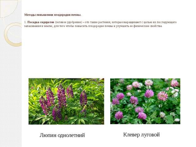 Методы повышения плодородия почвы. 1. Посадка сидератов (зеленое удобрение)...