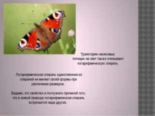 Траектории насекомых летящих на свет также описывают логарифмическую спираль.