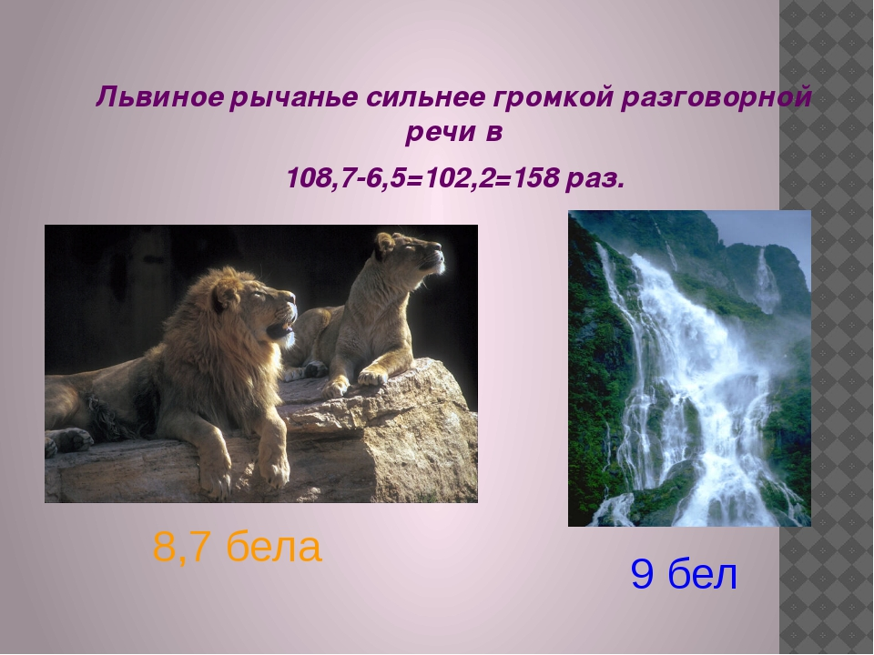 Львиное рычанье сильнее громкой разговорной речи в 108,7-6,5=102,2=158 раз. 8...