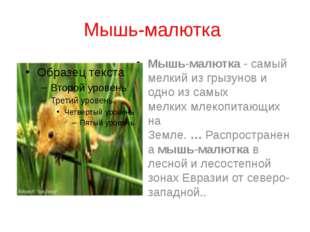 Мышь-малютка Мышь-малютка- самый мелкий из грызунов и одно из самых мелких