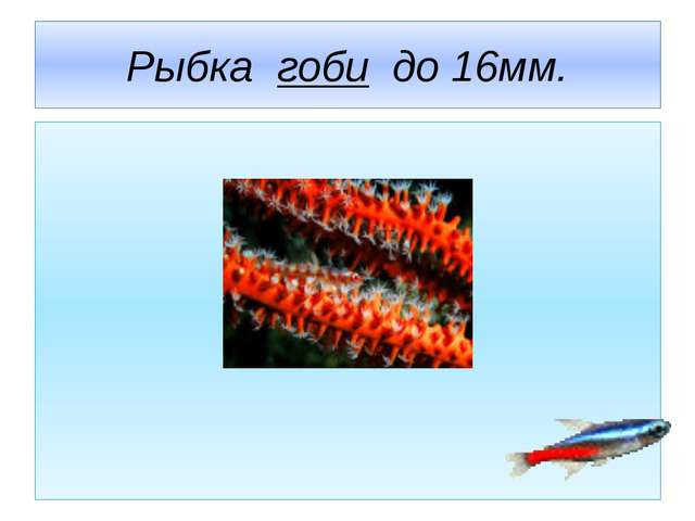 Рыбка гоби до 16мм.