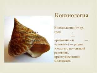 Конхиология Конхиология,(от др.-греч. κόγχη, κογχύλιον — «раковина» и λόγος —