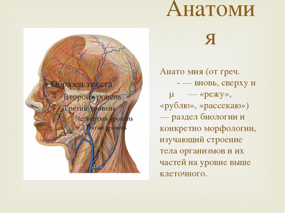 Анатомия Анато́мия (от греч. ἀνα- — вновь, сверху и τέμνω — «режу», «рублю»,...